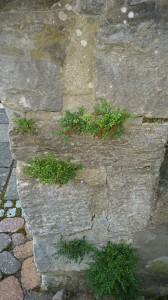 Gruene Mauer